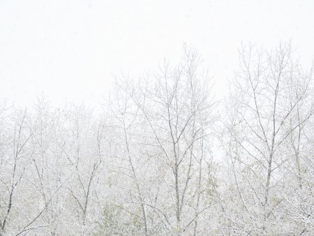 Skog i vinterver