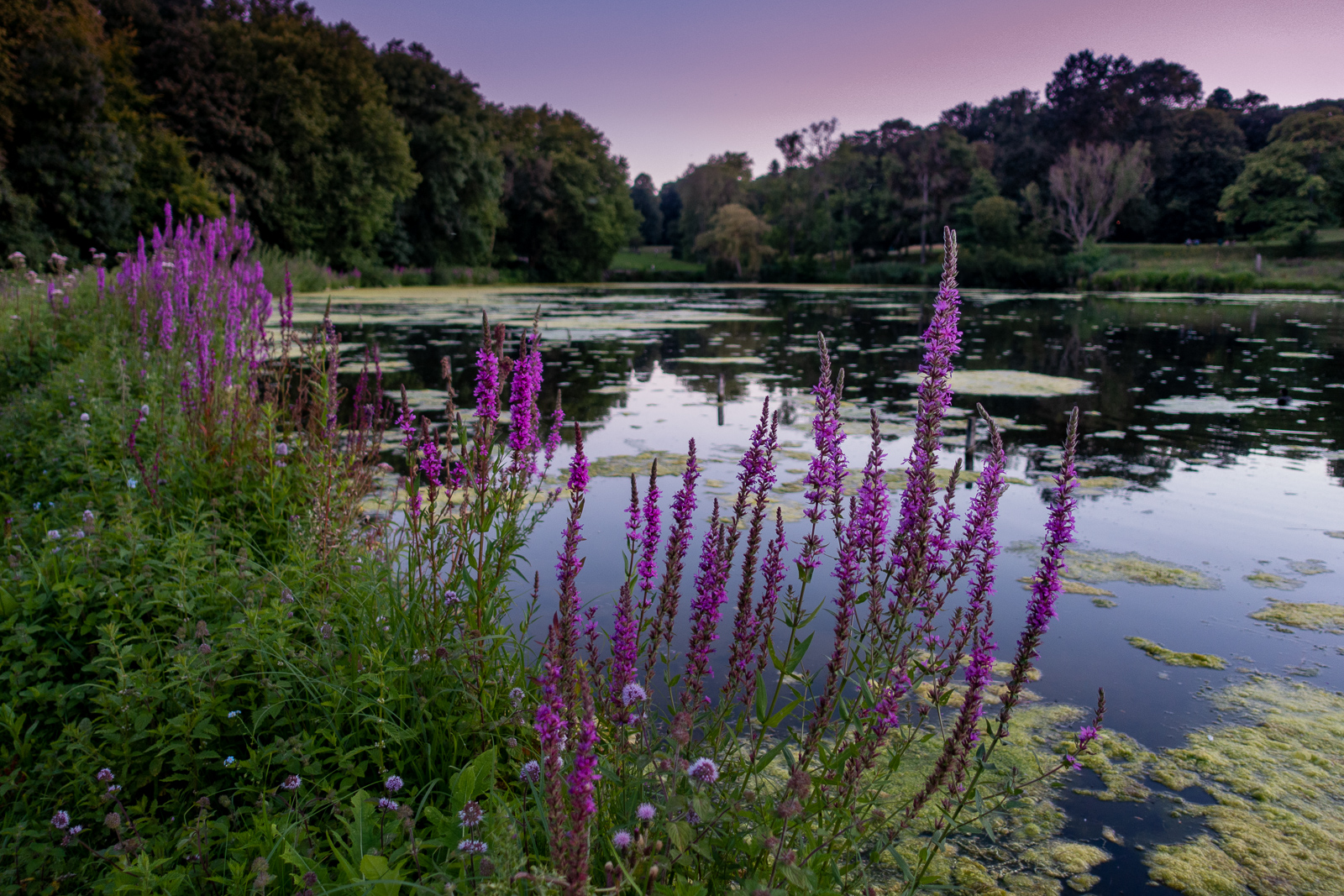 Nature near home: Parc Woluwe
